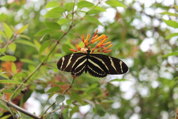 Butterfly on Flower thumbnail