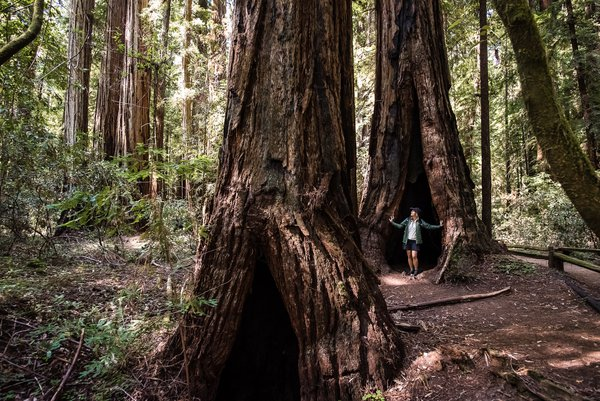 Hiking in the redwood forest thumbnail