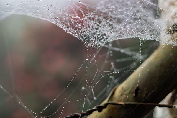 Dew Spider Web thumbnail