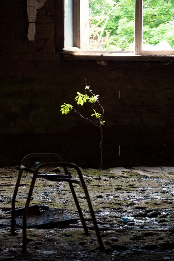 Awakening of life among ruins thumbnail