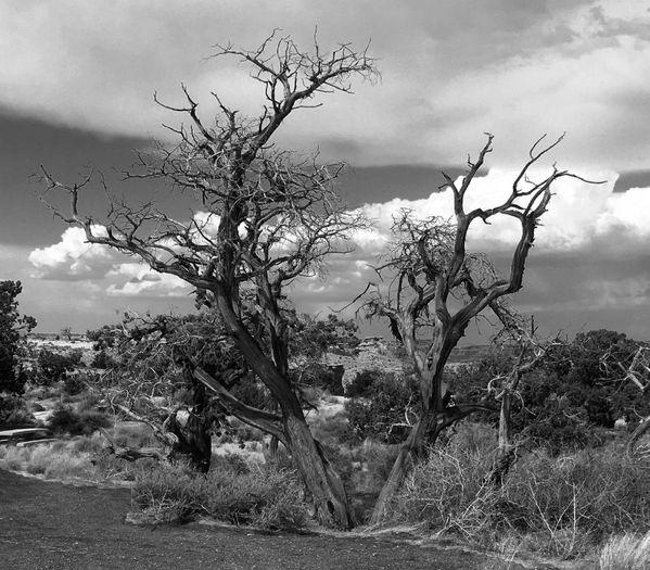 A Skeletal Tree in Utah thumbnail