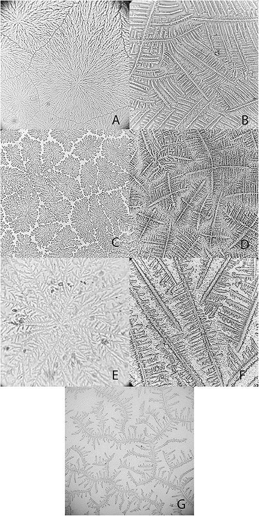 Microscopically, Crocodile Tears Look Sort of Like Our Own