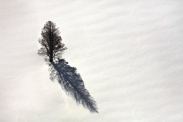 Aerial view of a tree in a field of snow thumbnail