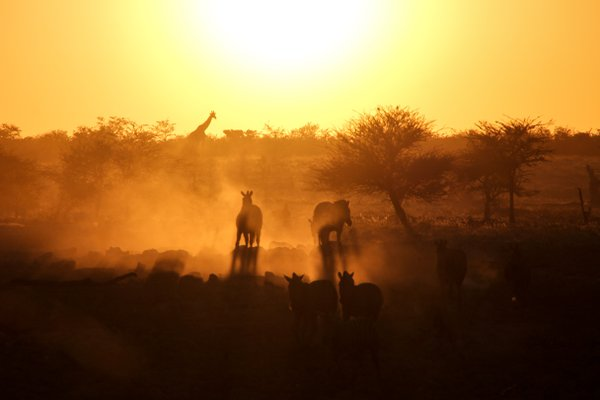 Golden Hour at the Watering Hole thumbnail