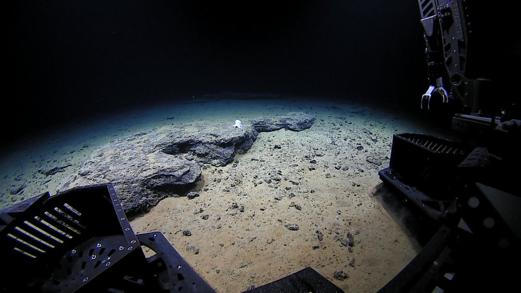 Deep-Sea Robot Spies Ghostly, Unknown Octopus