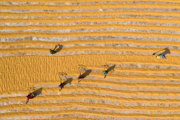 Rice drying thumbnail