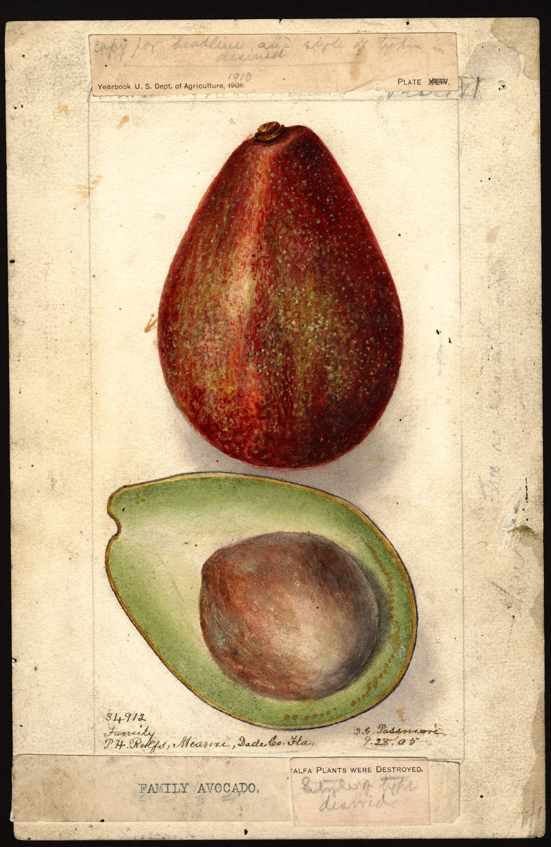 """America's First """"Food Spy"""" Traveled the World Hunting for Exotic Crops"""