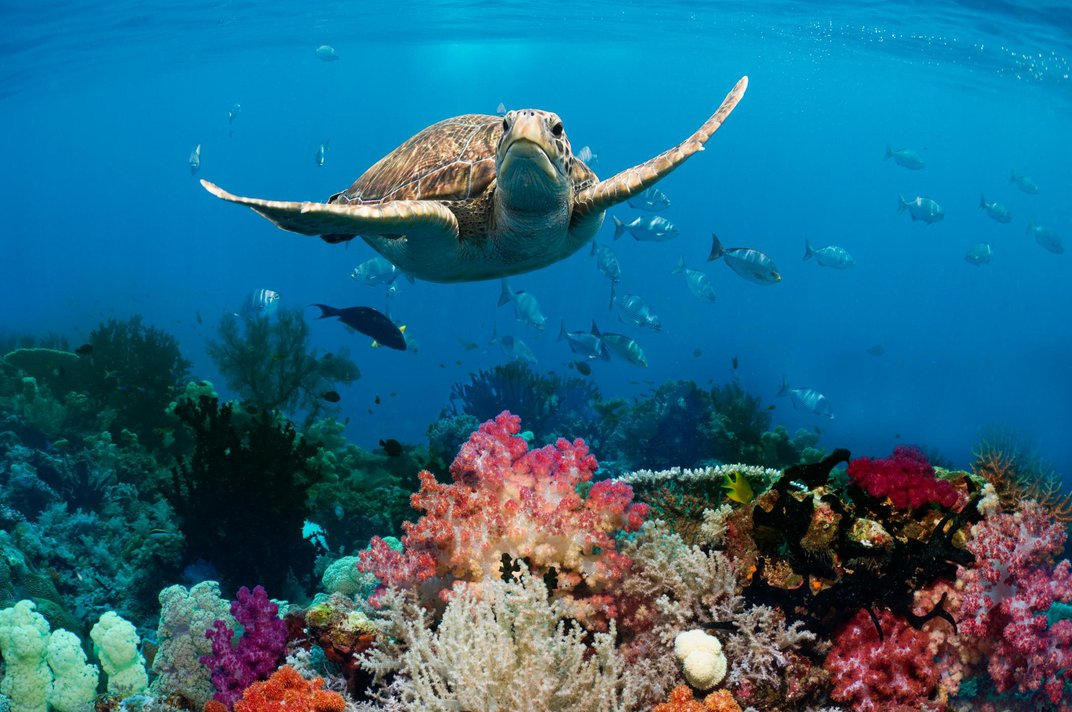Eighteen Things We've Learned About the Oceans in the Last Decade