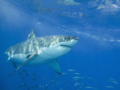 A system in testing off the coast of Cape Town uses an electric field to safely ward off predators.