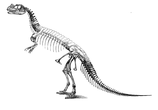 20110520083238ceratosaurus-skeleton-marsh.jpg