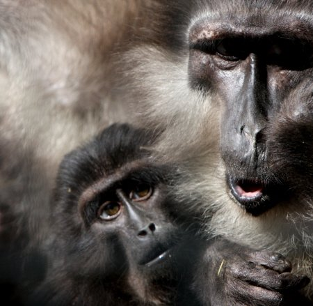 Baby and papa baboons are curious thumbnail