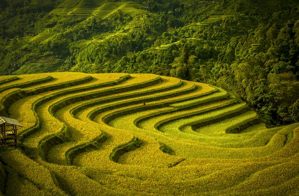 Terraced fields in harvest season thumbnail