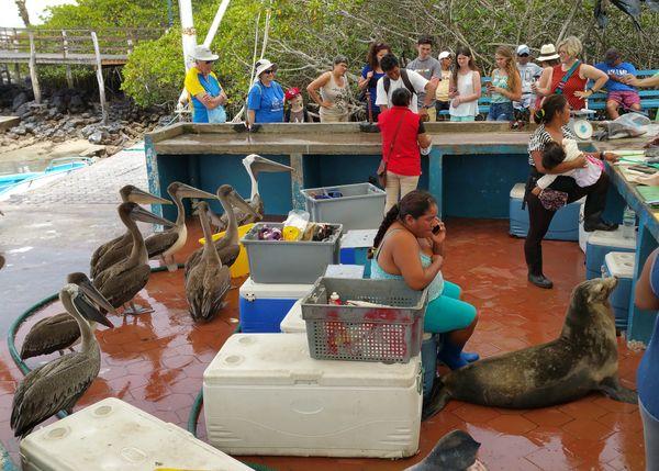 Fish Market in Puerto Ayora, Santa Cruz Island, Galapagos.  thumbnail