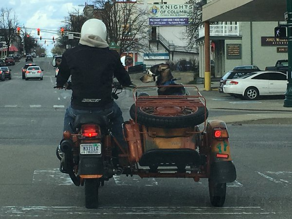 Man and dog, motorcycle, sidecar.  thumbnail