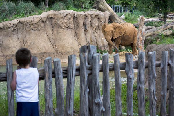 Boy and the Elephant thumbnail