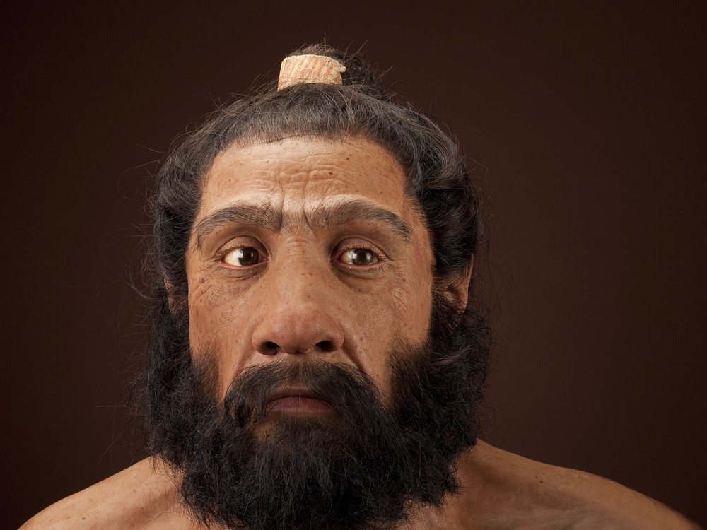 A reconstruction of what a male Neanderthal may have looked like. The reconstruction looked like a man with a thick beard and mustache, and his hair is tied back.
