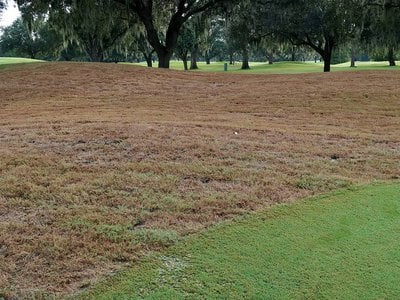 Once fall armyworms attack, lawns can go from green to brown in less than 48 hours.