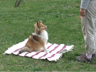 The dogs moved off a mat that had a toy attached to it, showing that dogs may understand their body size and where they are in the environment when solving a task.