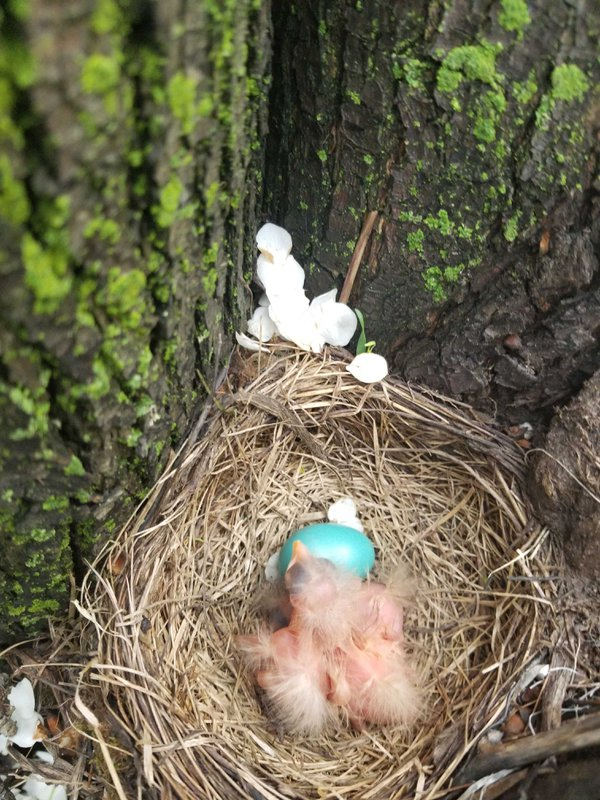 A baby bird in its nest thumbnail