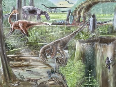 The Evolution of Terrestrial Ecosystems working group combines expertise from paleontologists and ecologists to improve our understanding of ancient and modern ecosystems. (Mary Parrish, Smithsonian)