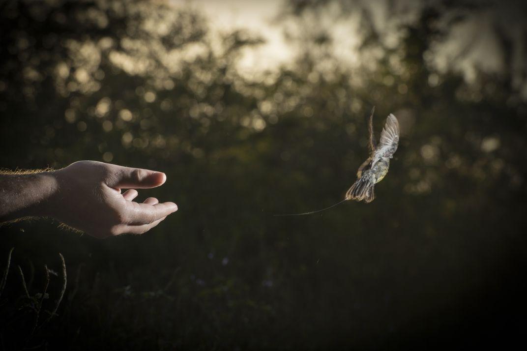 High-Tech Tracking Reveals 'Whole New Secret World of Birds'