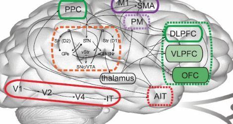Meet Spaun, a computer model that mimics brain behavior.