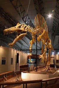 20110520083227Mounted_Spinosaurus-200x300.jpg