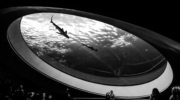 Shark Tank thumbnail