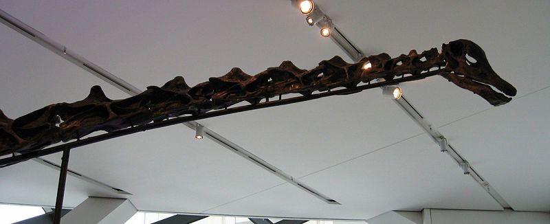 20110520083303ROM-Barosaurus.jpg
