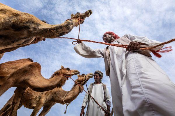 Camel's Company thumbnail