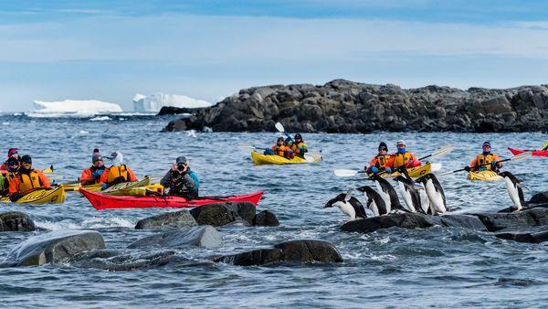 Adelie penguins and kayakers, Antarctic Peninsula thumbnail