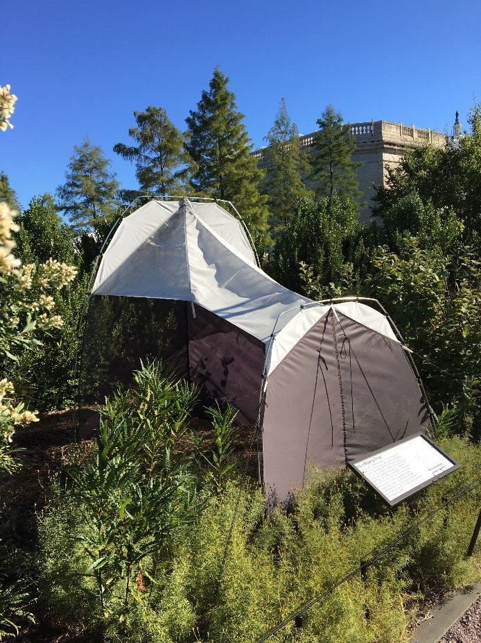 A tent in a garden behind a building.