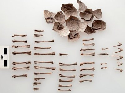 Turkey eggshells and bones from an offering 1,500 years ago in Oaxaca, Mexico.