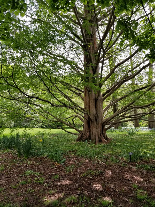 Tree trunk thumbnail