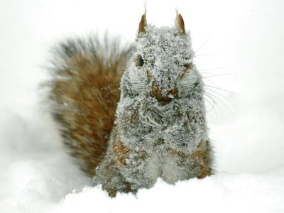 A chilly squirrel.