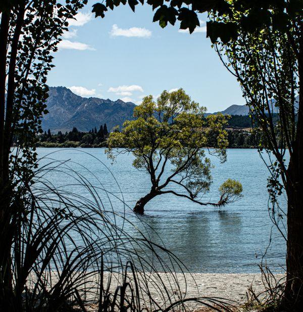 Wanaka tree framed by nature thumbnail