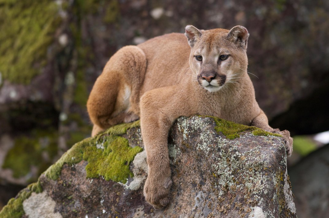 American Safaris: Where to See the Biggest Mammals in the U.S.