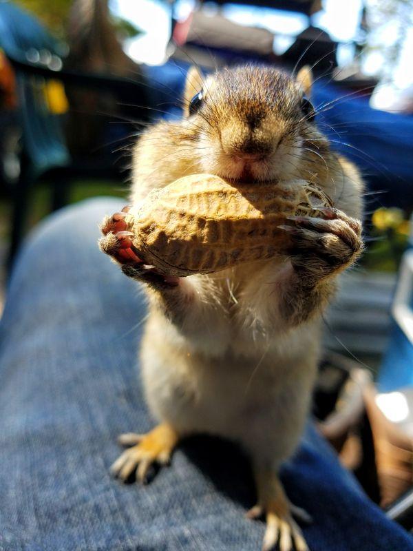 Who needs cheese... I've got a peanut!  thumbnail