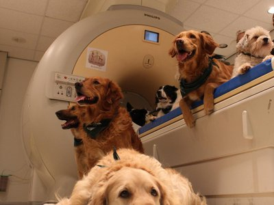 Researchers studying how dog respond to human and dog faces found no difference in brain activity when domestic dogs were shown the back of a dog or human head compared to a dog or person's face.
