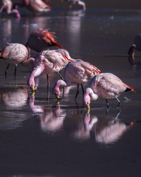 Flamingo Flamingo Flamingo thumbnail