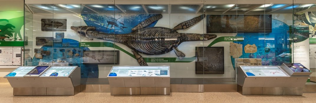 Large fossil plesiosaur in a display case discussing ocean evolution at the Smithsonian's National Museum of Natural History