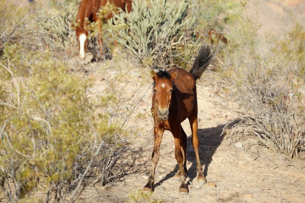 Wild foal posing for a photograph. thumbnail
