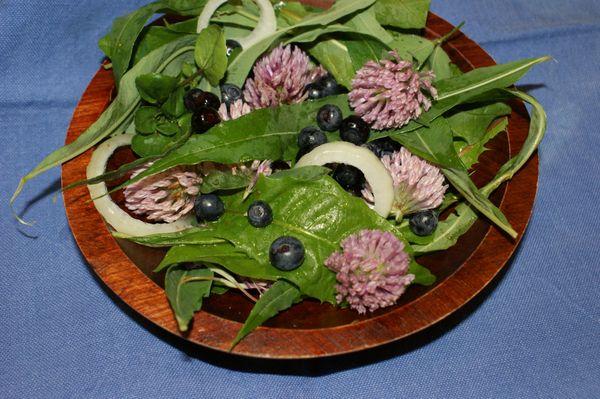 a foraged wild salad thumbnail