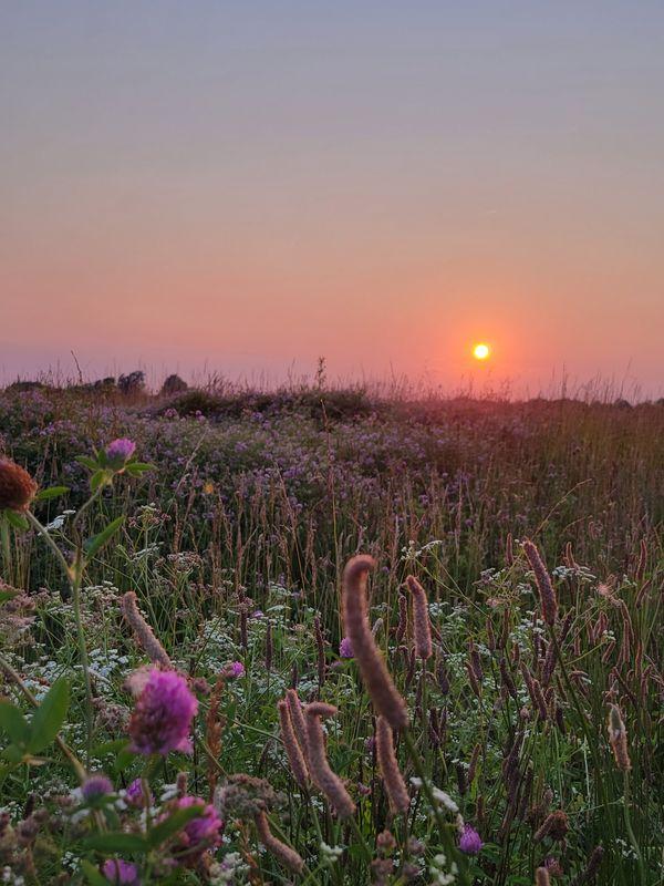 Floral Sunset thumbnail