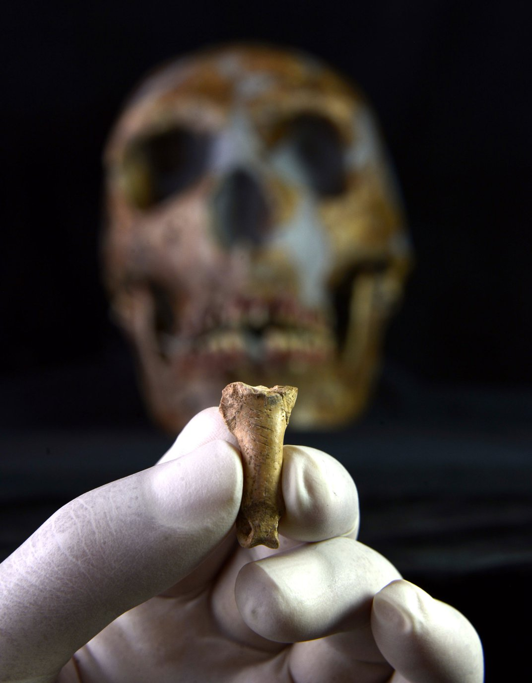Eagle Talon Jewelry Suggests Neanderthals Were Capable of Human-Like Thought