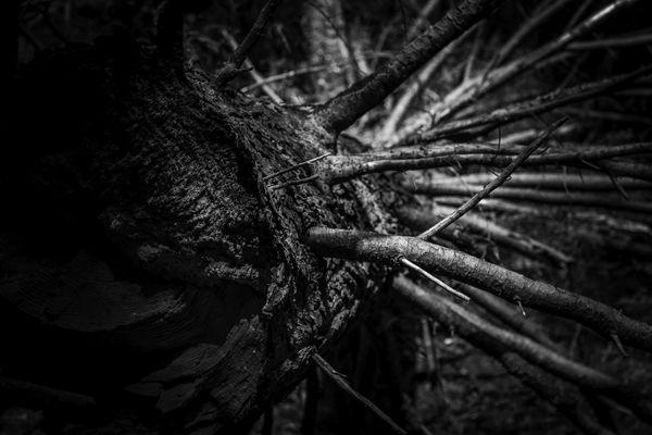 Texture of a Fallen Tree thumbnail