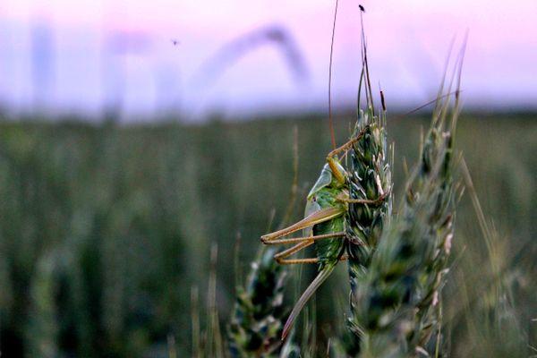 Chasing grasshopper thumbnail