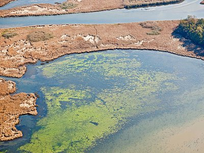 An algae bloom off the coast of Maryland. Such blooms help create low-oxygen areas called dead zones as the algae respire or decompose.