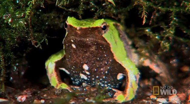 20120705083006darwinian-frog_nat-geo.jpg