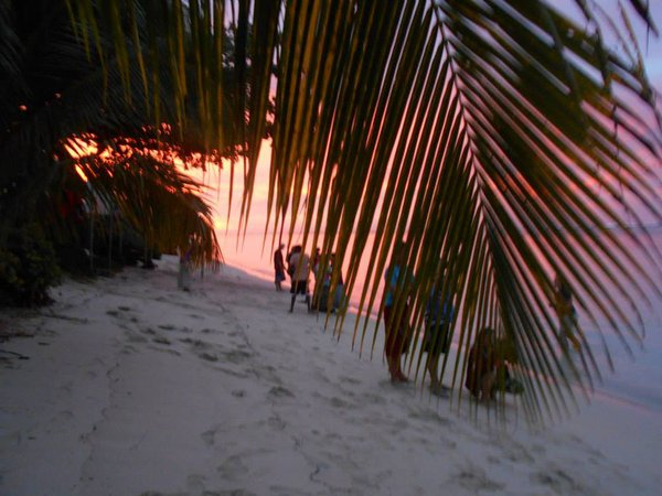Sunset captured from behind the fronds of a palm tree on a breathtaking beach on the island of Savai'i in Samoa. thumbnail